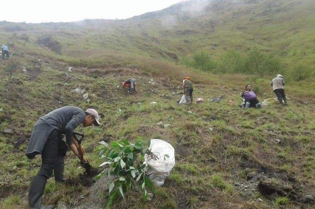 MachuPicchu: Santuario es reforestado con un millón de árboles nativos